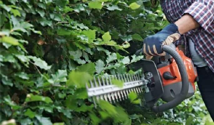 5 Best Lightweight Hedge Trimmers